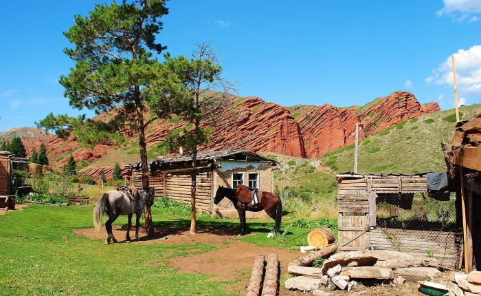 Beautiful Kyrgyzstan. In the photo horses at a background of red sand stones in Jeti-Öghüz.