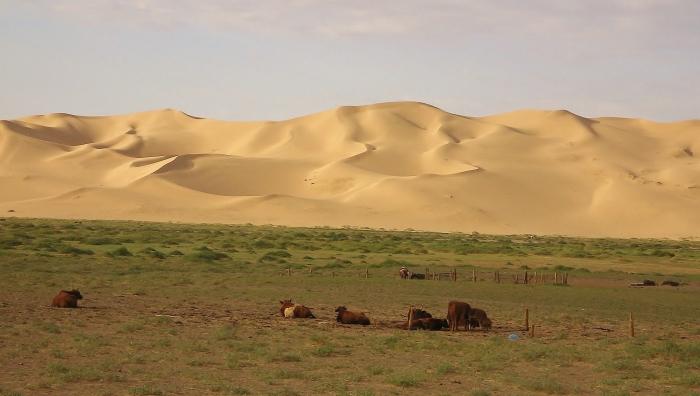 The Gobi desert - Khongorun Els sand dunes.