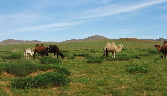 mongolia-gobi