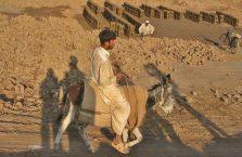 Pakistan - mężczyzna na osiołku.