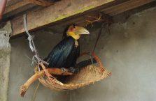 Kambodża - interesujący ptak.