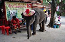 Tajlandia - mały słoń w czapce.