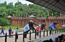 Tajlandia - słonie podczas pokazu.