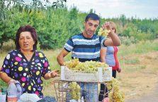 Armenia - ludzie sprzedający winogrona.