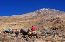 Iran - osiołki niosą zapasy na szczyt Damavand.