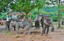 Tajlandia - słonie.