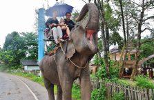 Tajlandia - przejażdżka na słoniu.