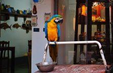 Tajlandia - papuga ara.