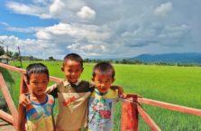Birma - chłopcy przez polem ryżowym.