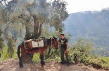 Liban - z koniem.
