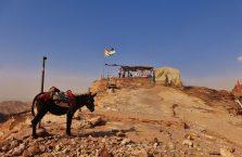 Jordania (Petra) - osiołek na szczycie góry.