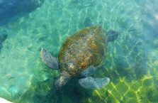 Izrael - żółw morski.