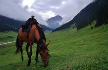 Kirgistan - koń.