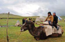 Kirgistan - dzieci na wielbłądzie.