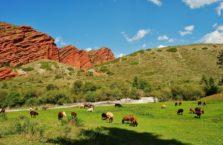 Kirgistan - owce na pastwisku.