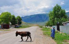 Kazachstan - osioł.