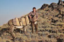 Turkey - with a donkey.