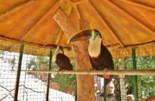Iraqi Kurdistan - toucan in zoo in Dohuk.
