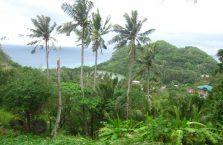 Apo island(11)