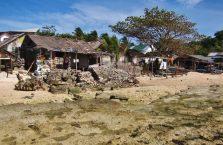 Apo island(3)