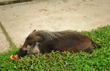 Bako National Park- Borneo (10)