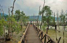 Bako National Park- Borneo (12)