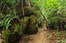 Bako National Park- Borneo (13)