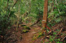 Bako National Park- Borneo (17)