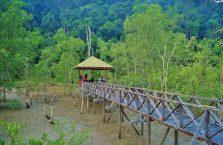 Bako National Park- Borneo (18)