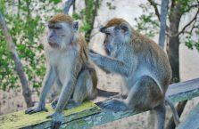 Bako National Park- Borneo (19)