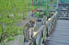 Bako National Park- Borneo (20)