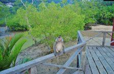 Bako National Park- Borneo (21)
