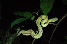 Bako National Park- Borneo (22)