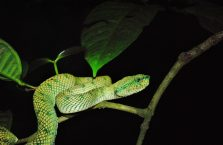 Bako National Park- Borneo (23)
