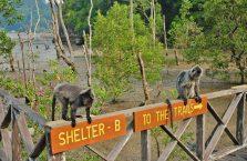 Bako National Park- Borneo (27)