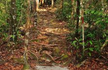 Bako National Park- Borneo (28)