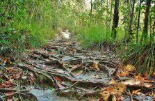 Bako National Park- Borneo (29)