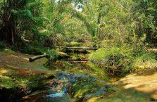 Bako National Park- Borneo (30)