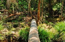 Bako National Park- Borneo (31)