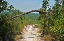 Bako National Park- Borneo (35)