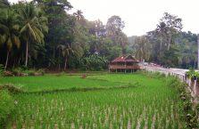 Bohol trip (13)