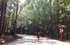 Bohol trip (30)