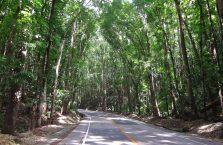 Bohol trip (9)