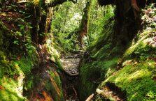 Cameron Highlands (3)