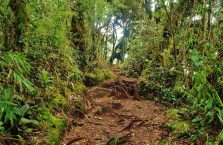 Cameron Highlands (7)