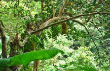 Casaroro Falls Negros (3)