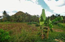 Chocolate Hills Bohol (5)