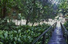 Gumantong cave Borneo Malaysia(10)