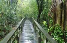 Gumantong cave Borneo Malaysia(14)