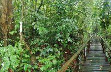Gumantong cave Borneo Malaysia(15)